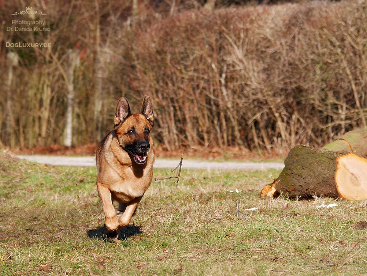 Der Frühling kommt und mit ihm auch die Frühlingsgefühle beim Hund…