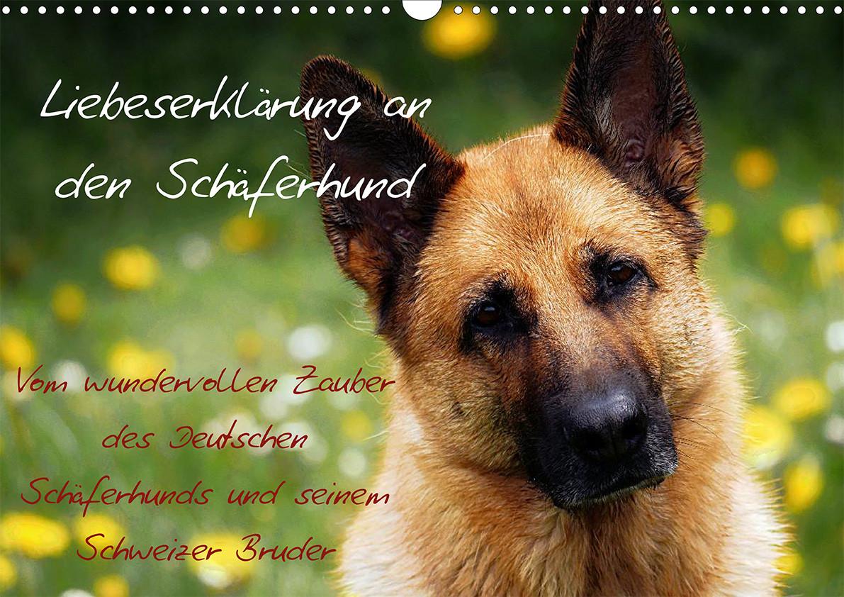 Hundekalender: Liebeserklärung an den Schäferhund