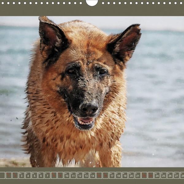 Hundekalender: Faszinierende Augenblicke mit dem Deutschen Schäferhund 2017