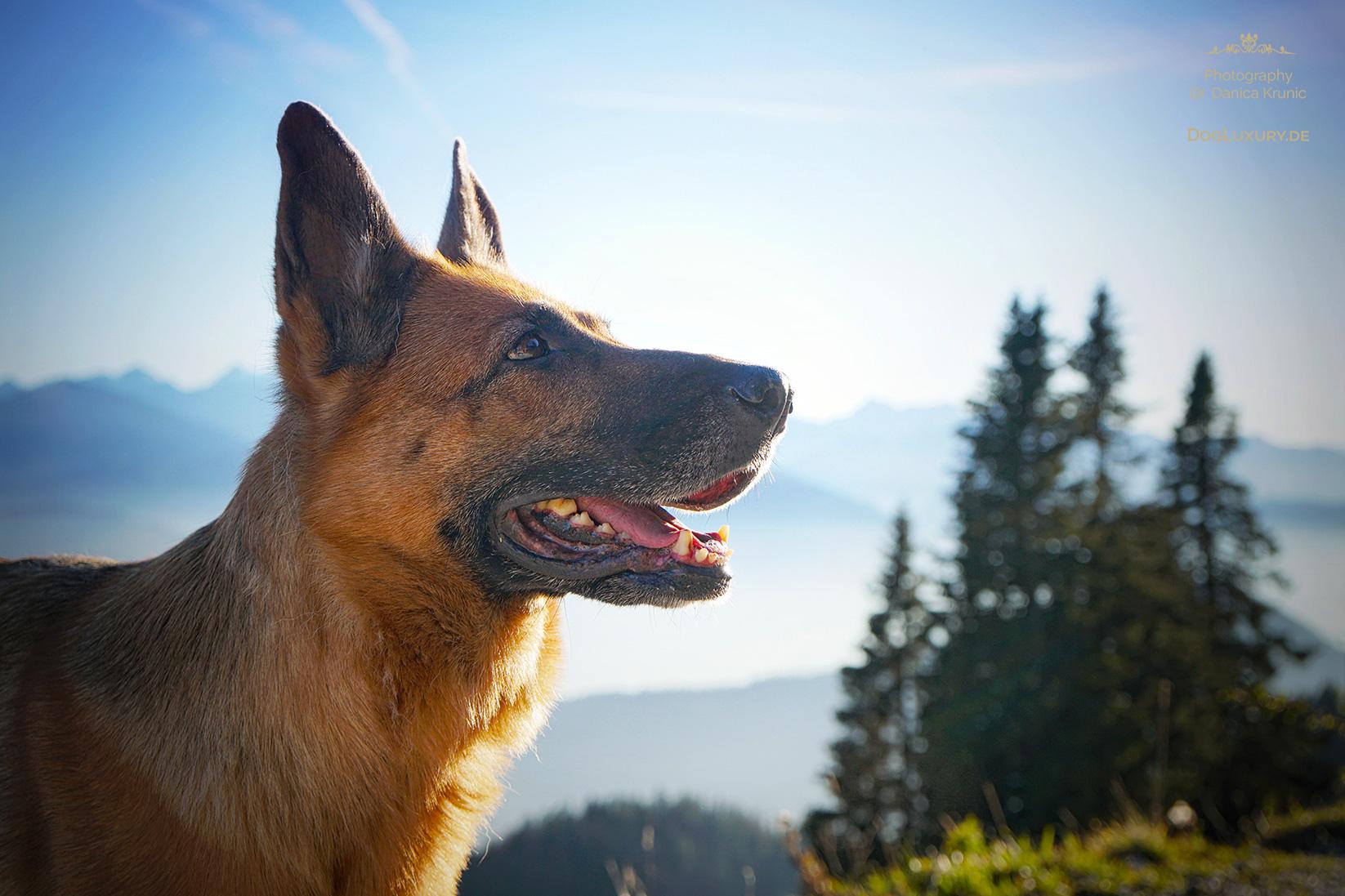 Wandern mit dem Hund