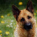 """Geschenke für Hundehalter: Puzzle """" Liebeserklaerung an den Schäferhund"""""""