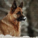 """Geschenke für Hundehalter: Puzzle """"Schneekönigin im Winterparadies"""""""