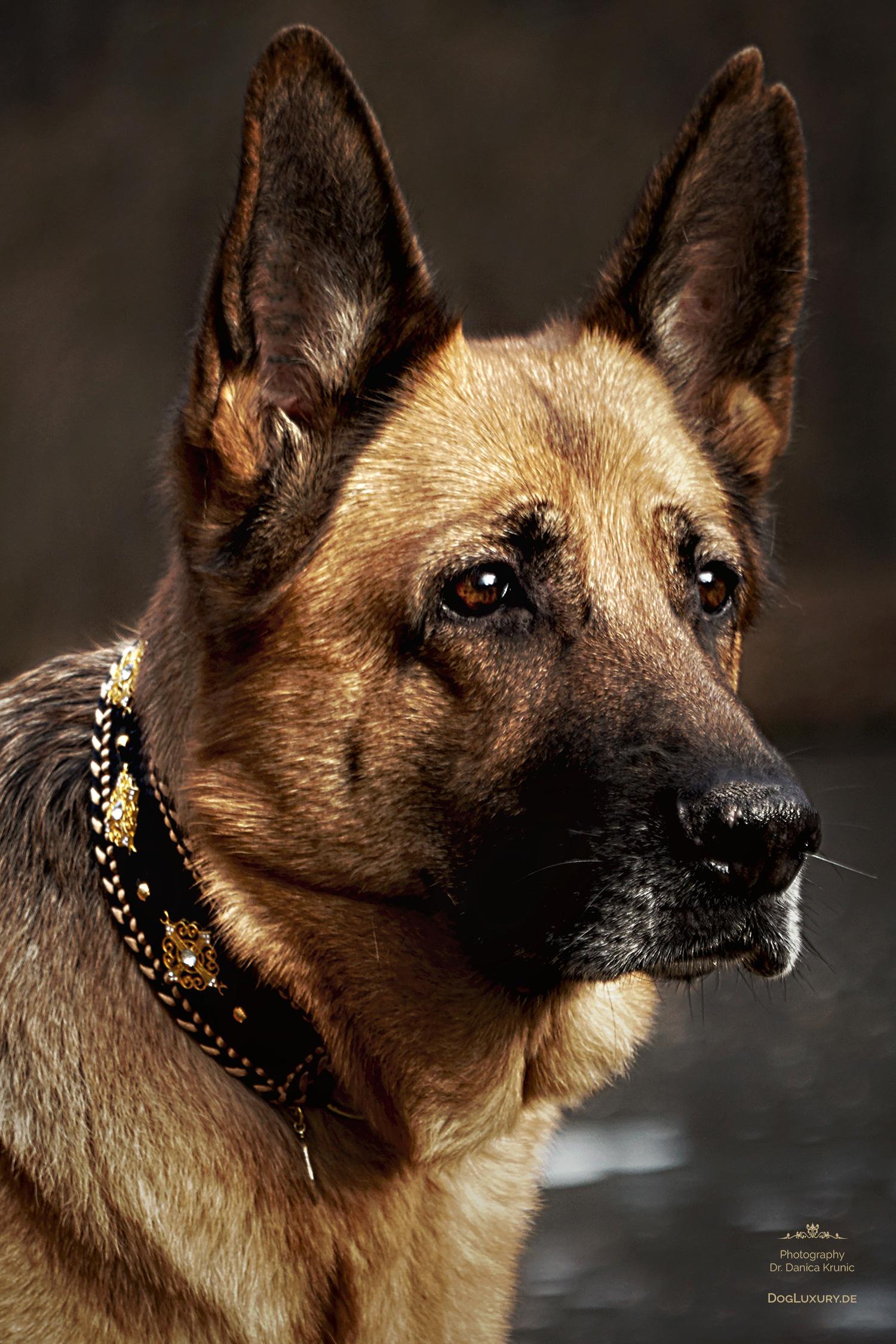 Luxus Hundezubehör für den Luxury Dog: Hundehalsband