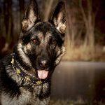 Luxus Hundezubehör für den Luxury Dog
