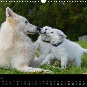 weisser-schweizer-schaeferhund-starick-03