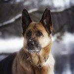 Schönes Hundehalsband aus Seide mit eleganter Zugstoppkette