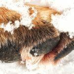 Hundepfote im Winter: Pfotenpflege gegen Kälte, Schnee, Eis und Streusalz