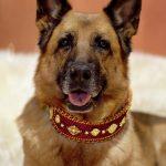 Exklusive Designer Luxus Hundehalsbänder mit Strass