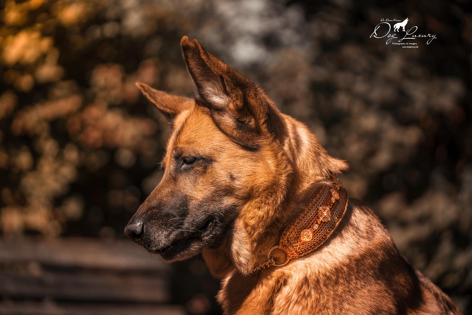 Hundezubehör: Hundehalsband individuell und edel aus Seide Nylon mit Zugstopp
